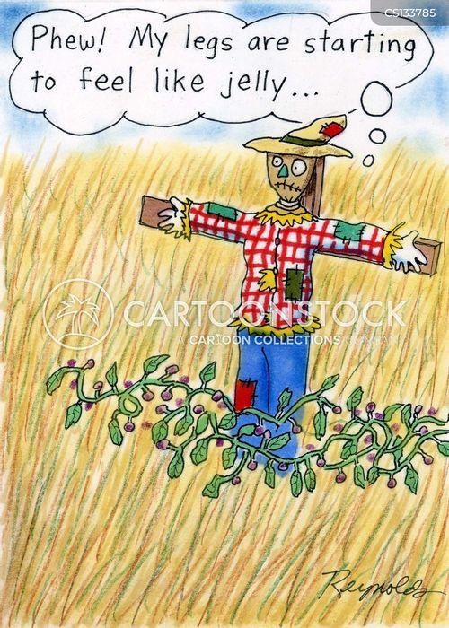 corn field cartoon
