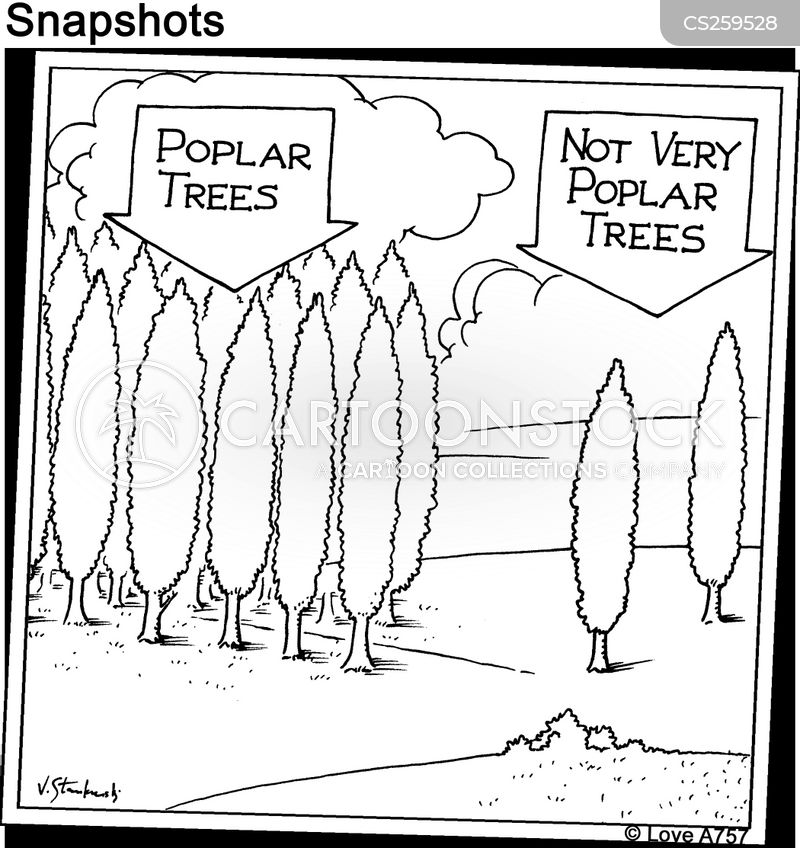 poplar cartoon