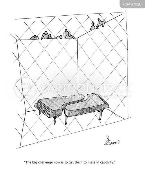 husbandry cartoon