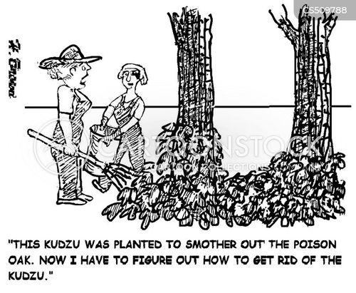 poison oak cartoon