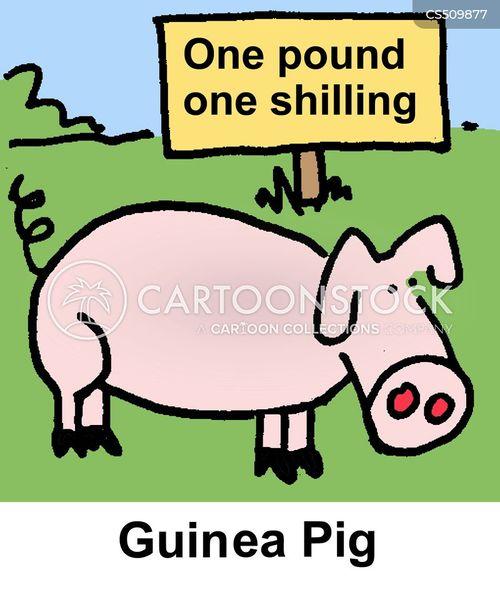 guinea cartoon