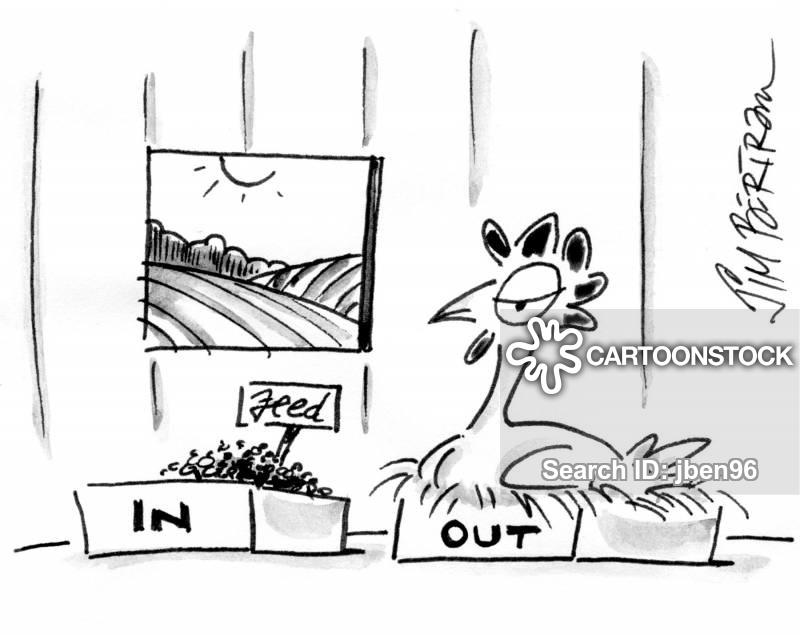henhouse cartoon