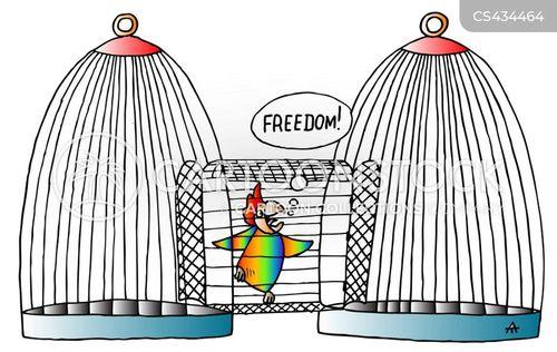 birds of paradise cartoon