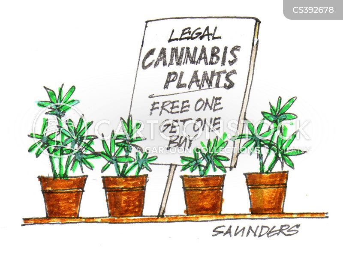 green wednesday cartoon