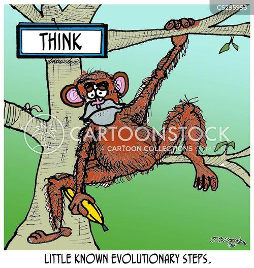 evolutionary step cartoon