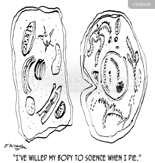 amoebas cartoon