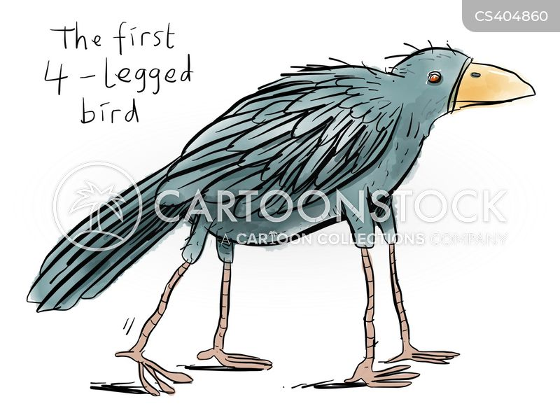 bird experts cartoon