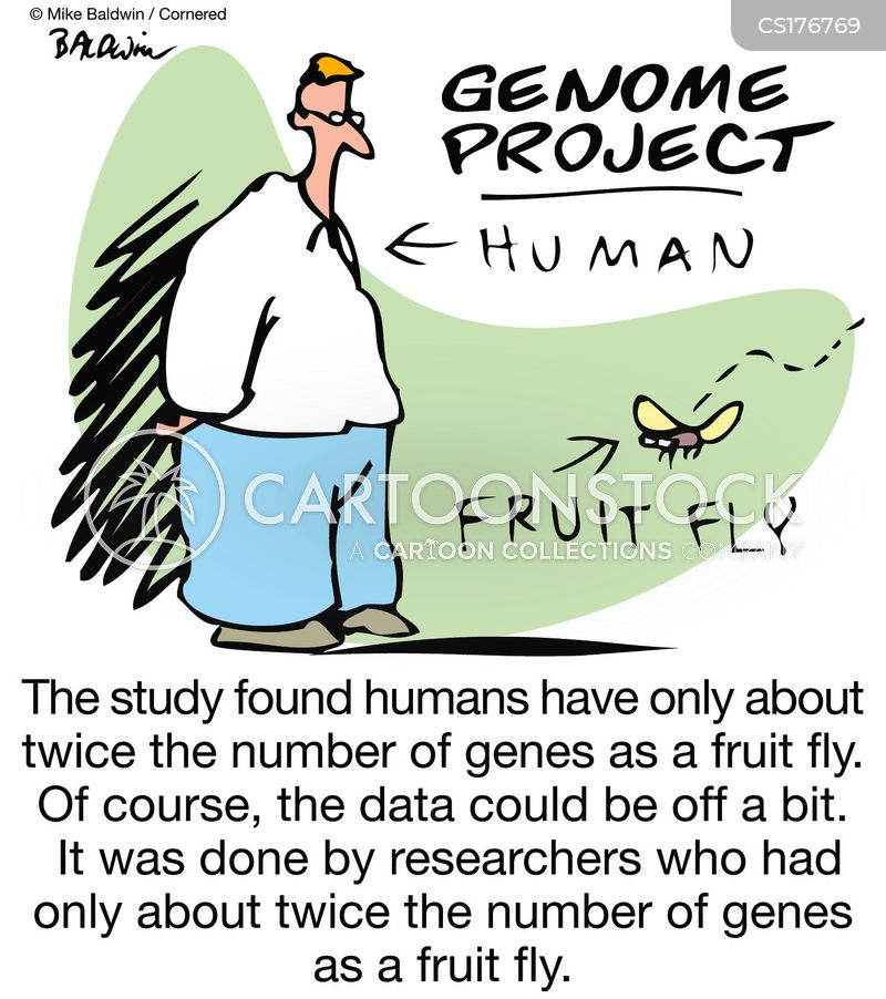fruit flies cartoon