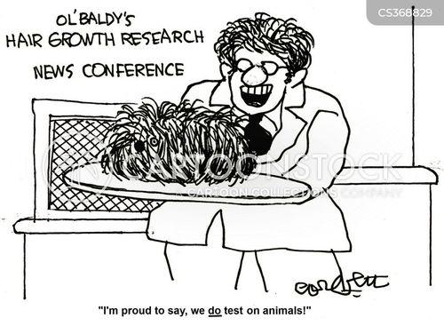 hair transplant cartoon