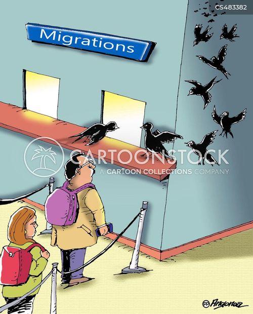 flight patterns cartoon