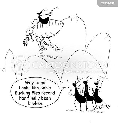 myrmecology cartoon