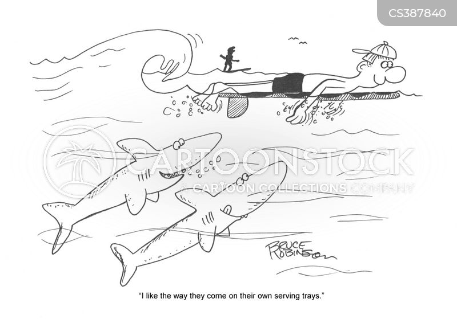 surf boards cartoon