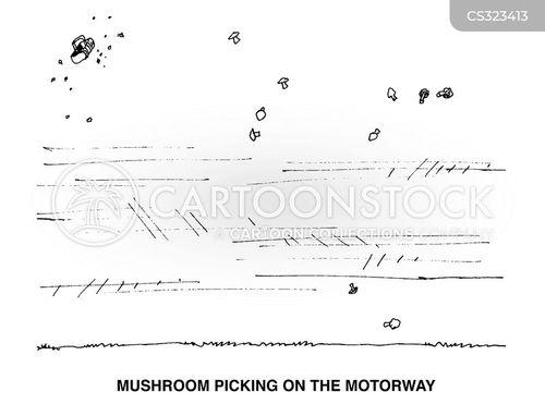 mushroom picking cartoon