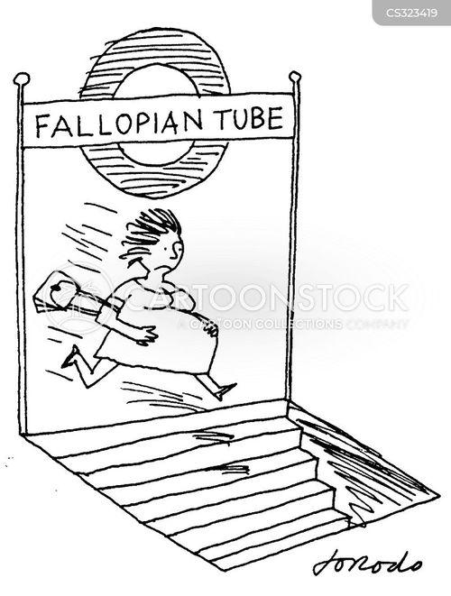 fallopian tube cartoon