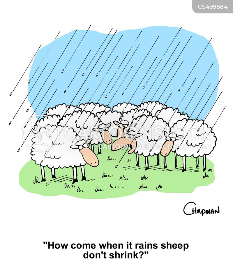 sheep wool cartoon