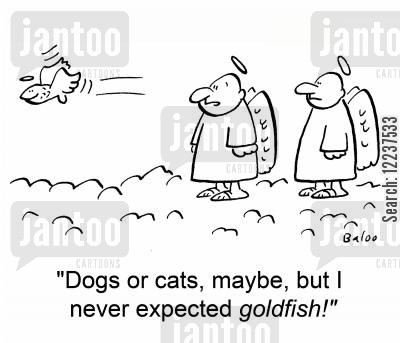 raining cats and dogs cartoon humor: 'Dogs or cats, maybe, but I never expected goldfish!'