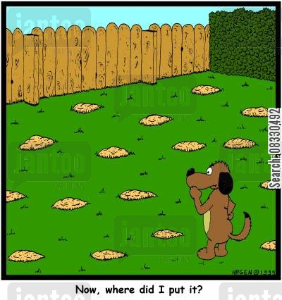 buries cartoon humor: 'Now, where did I put it?'