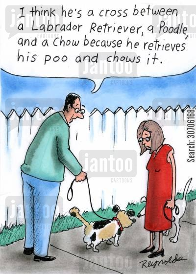 retriever cartoon humor: 'I think he's a cross between a Labrador, Retriever, a Poodle, and a chow because he retrieves his poo and chews it.'