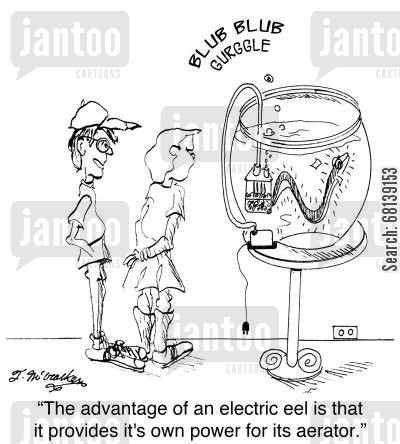 fish bows cartoon humor: 'The advantage of an electric eel is that it provides it's own power for its aerator.'