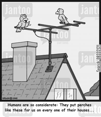 seated cartoon humor: 'Humans are so considerate: They put perches like these for us on every one of their houses...'