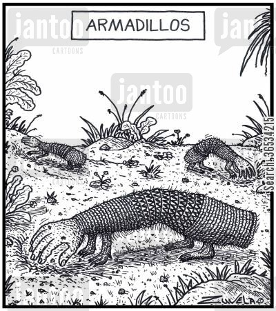 armadillo cartoon humor: Armadillos