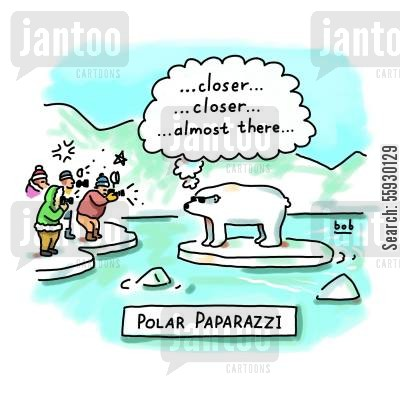 ice cap cartoon humor: Polar Bear Paparazzi.