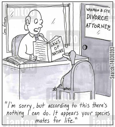 laws of nature cartoon humor: 'I'm sorry, but according to this there's nothing I can do. It appears your species mates for life.'