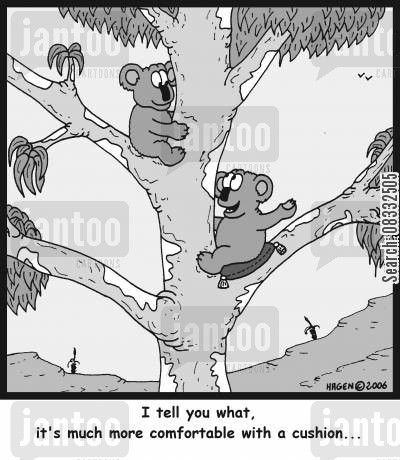eucalyptus tree cartoon humor: 'I tell you what, it's much more comfortable with a cushion...'