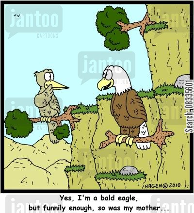 bald eagles cartoon humor: 'Yes, I'm a bald eagle, but funnily enough, so was my mother...'