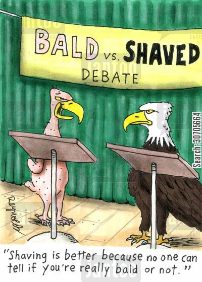 falcons cartoon humor: 'Shaving is better because no one can tell if you're really bald or not.'