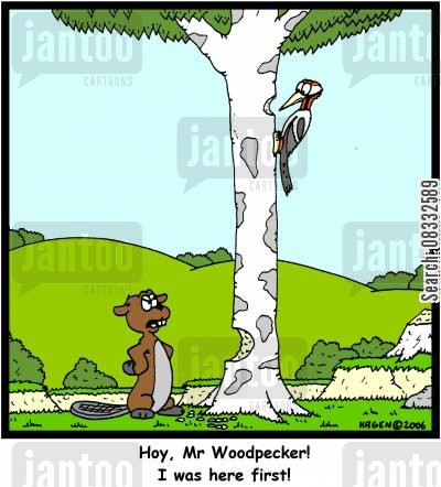 peck cartoon humor: 'Hoy, Mr Woodpecker! I was here first!'