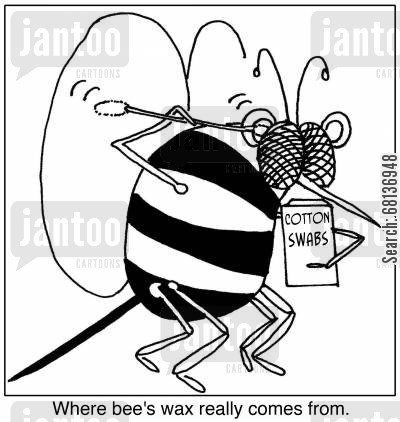apiarist cartoon humor: Where bee's wax really comes from.