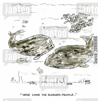 sea mammal cartoon humor: 'Here come the slimmer people.'