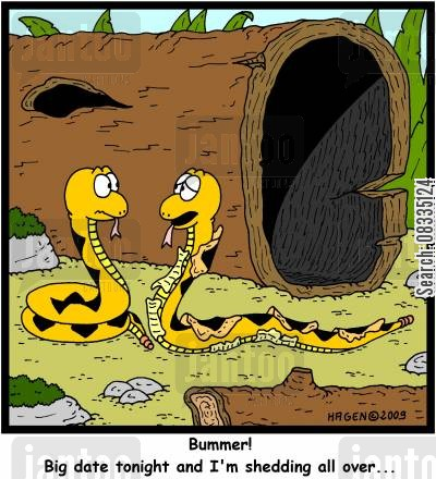 skin shedding cartoon humor: 'Bummer! Big date tonight and I'm shedding all over...'