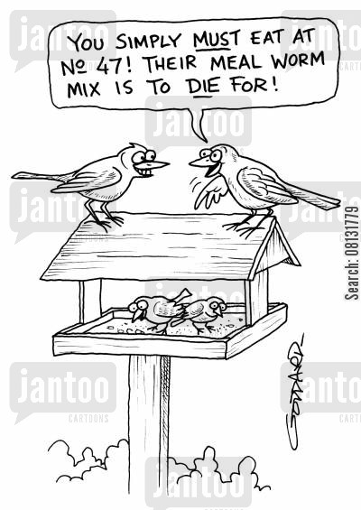 bird food cartoon humor: 'You simply must eat at No 47! Their meal worm mix is to die for!'