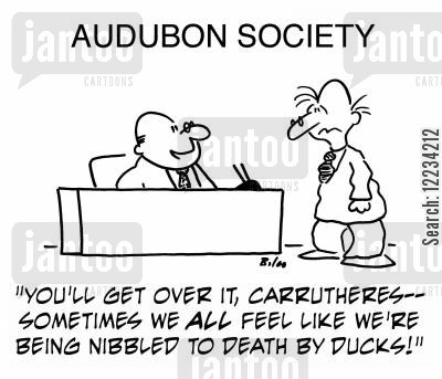 audobon society cartoon humor: 'You'll get over it, Carrutheres - sometimes we all feel like we're being nibbled to death by ducks!'