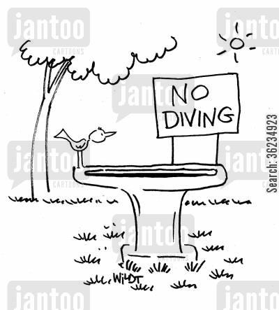 swimming baths cartoon humor: No Diving.
