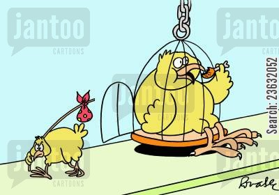 bird cages cartoon humor: Fat bird.