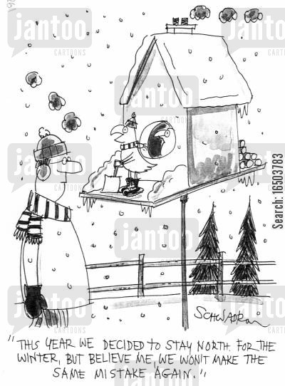 fly south cartoon humor: 'This year we decided to stay north for the winter, but believe me, we won't make the same mistake again.'