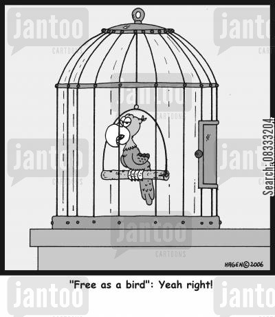 caged bird cartoon humor: ''Free as a bird': Yeah right!'