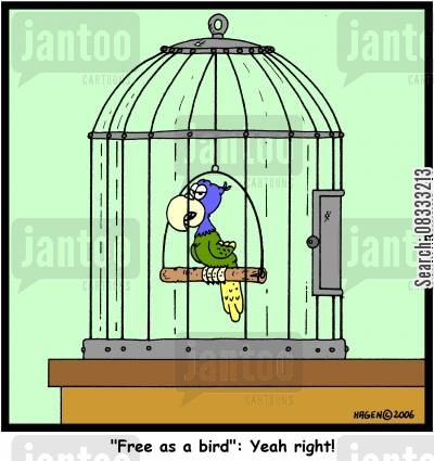 free as a bird cartoon humor: 'Free as a bird': Yeah right!