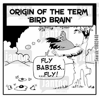 throws cartoon humor: Origin of the term 'bird brain': 'Fly, babies...fly!'
