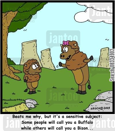 bisons cartoon humor: 'Beats me why, but it's a sensitive subject: Some people will call you a Buffalo while others will call you a Bison...'