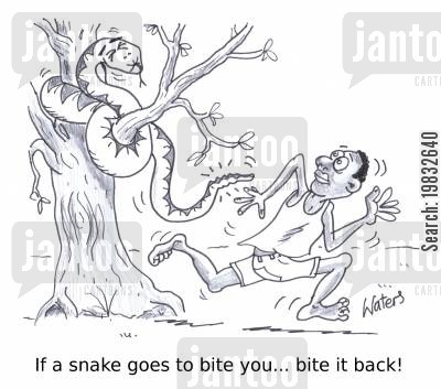 boa constrictors cartoon humor: If a snake goes to bite you... bite it back!