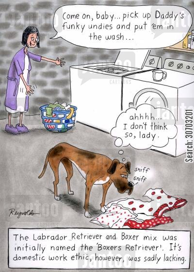 pedigree cartoon humor: The Labrador Retriever and Boxer mix was initially named the 'Boxers Retriever'. It's domestic work ethic, however, was sadly lacking.