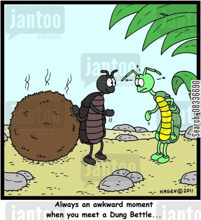 awkward moments cartoon humor: Always an awkward moment when you meet a Dung Beetle...