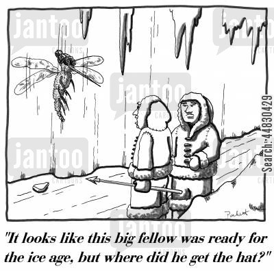 mosquito cartoon humor: 'It looks like this big fellow was ready for the ice age, but where did he get the hat?'