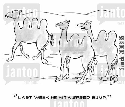 camel humps cartoon humor: 'Last week he hit a speed bump.'