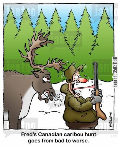 hunting trip cartoon humor: Fred's Canadian caribou hunt goes from bad to worse.