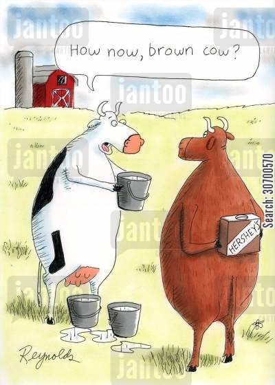 milk chocolate cartoon humor: 'How now, brown cow?'